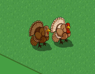 farmville turkeys side by side