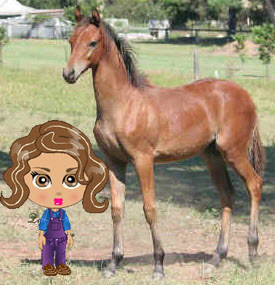 farmville freak farmgoddess with a colt