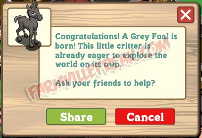 farmville grey foal is born notice