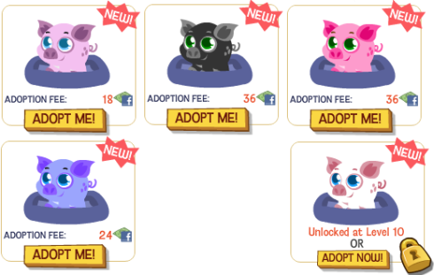 Colorful Happy Pets Piglets in the Store