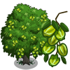 farmville arjun tree