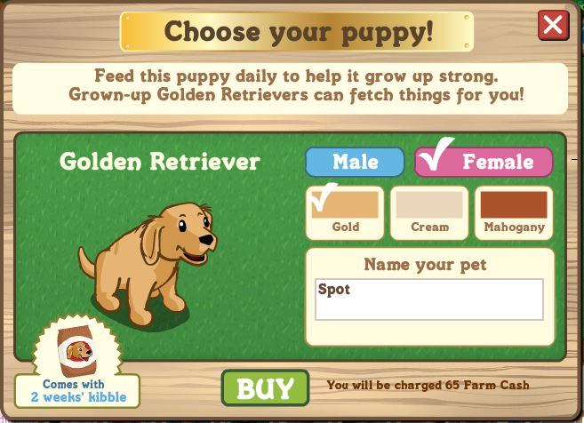 farmville golden retriever puppies