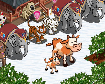 farmville fan calf