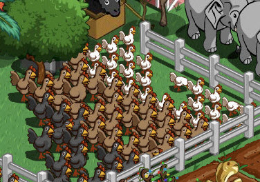 farmville flock shrinking white chickens