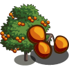 FarmVille Chocolate Persimmon Tree