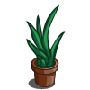 farmville aobe agave pot