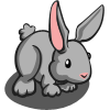 farmville grey rabbit
