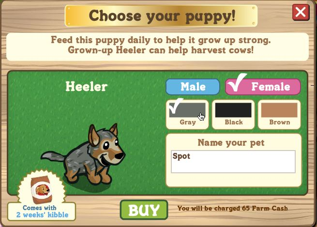 farmville heeler puppy