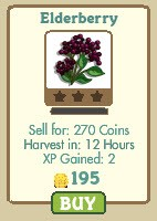 farmville elderberry