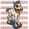 farmville white appaloosa foal