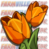 farmville orange tulip mastery