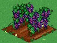 FarmVille grapes