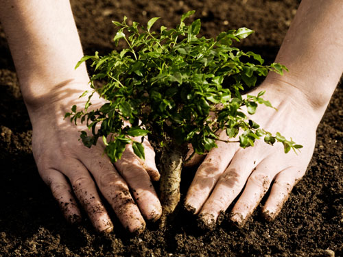 Earth Day planting trees