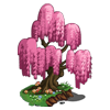 Pink Whispering Willow