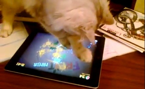 Cat plays Fruit Ninja