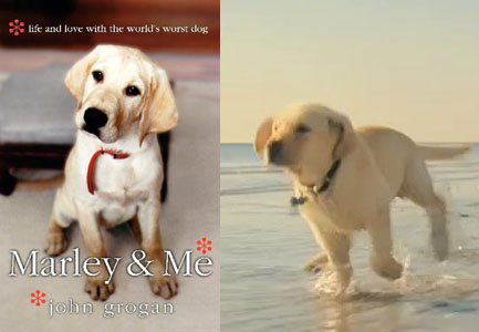 book report marley and me