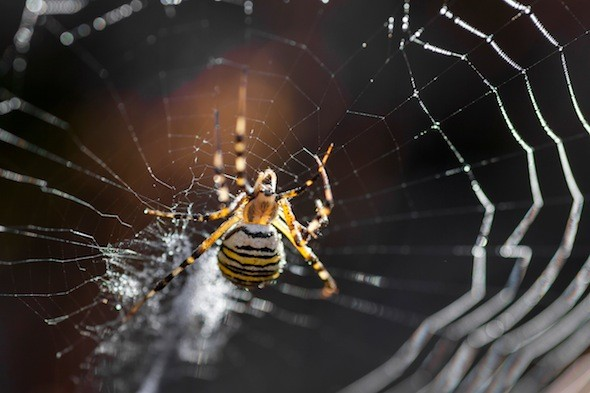 Toyota recalls 885,000 vehicles globally following fears that spiders could set off airbags