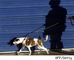 A volunteer walks a dog at Battersea Dogs' Home