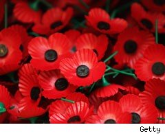 poppies for the Poppy Appeal