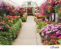 Tips for greenhouse beginners