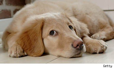 common canine ailments