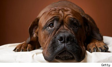 pet arthritis treatment dangers