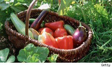 organic food nutrition research