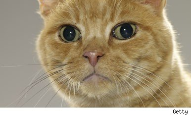 ginger cats seen as most lovable