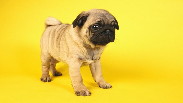 Warning over puppies for sale online