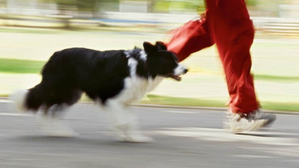 Two in five dog owners feels unwelcome in public spaces