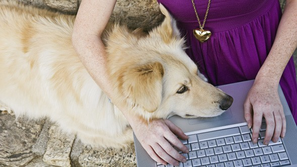 Pets cause £3.5 billion damage to gadgets