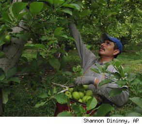 apple picking orchards workers