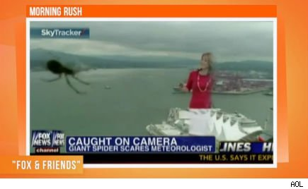 spider attacks weather girl
