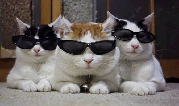 Cats in glasses