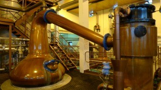 Macallan Distillery Tour