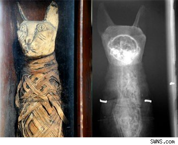 Robert Gray's cat mummy
