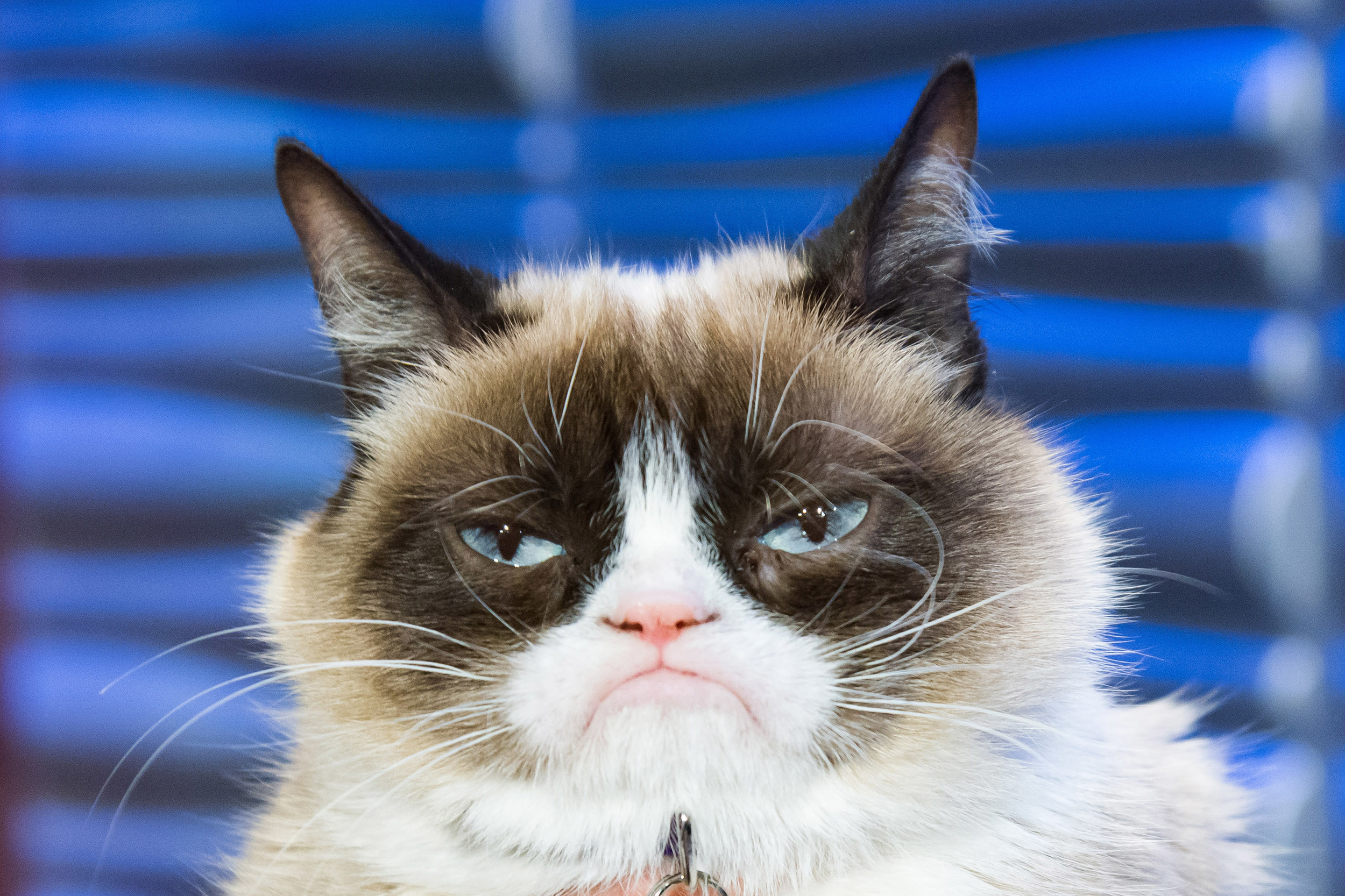 We sat down with Grumpy Cat and her humansTabatha Bundesen her brother Bryan and her daughter Crystalto find out all we could about this seriously