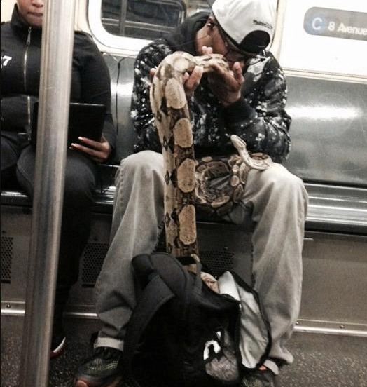 Man Brings Two Massive Snakes Onto The Subway