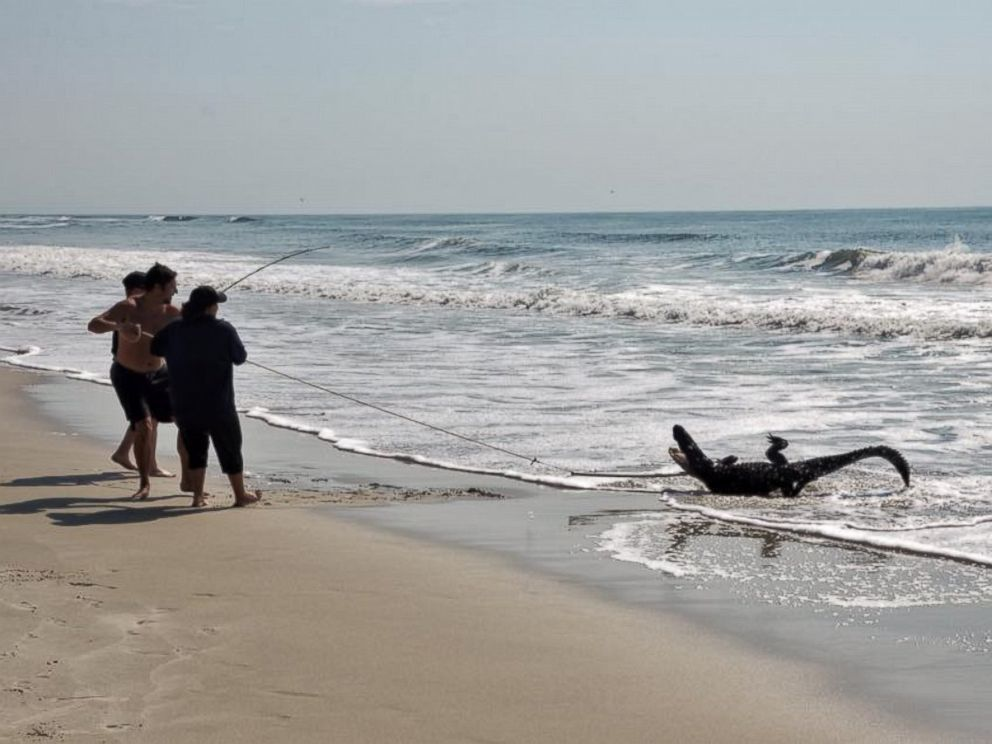 7 Foot Alligator Stuns Beachgoers In South Carolina