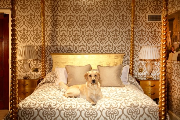 Paw-sitively perfect! New company finds hotels that love you - and your dog