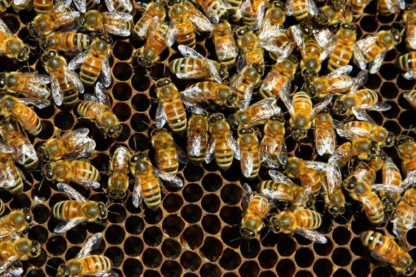 Two hives of bees cause panic on a plane mid-air in Russia