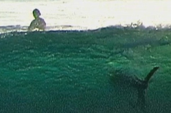 Shark! Surfers blissfully unaware of great white in wave