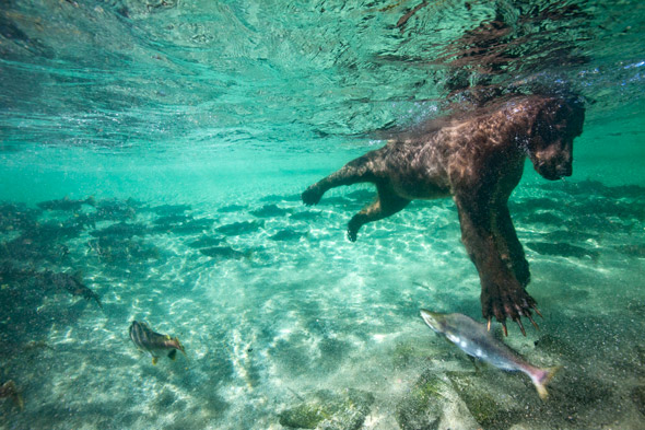 Amazing pics: Photography competition produces world's BEST wildlife images