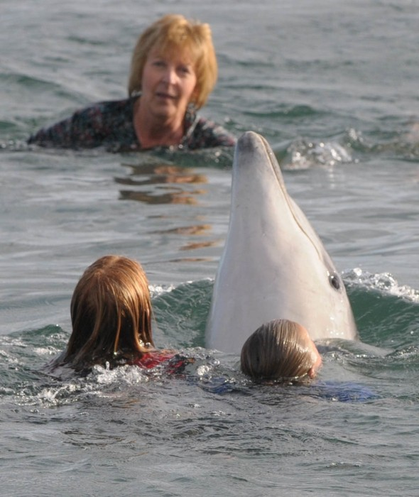 Flippin' good fun! George the dolphin plays with swimmers all day at beach in Devon