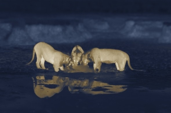 Night stalkers: New camera technology captures amazing safari pics