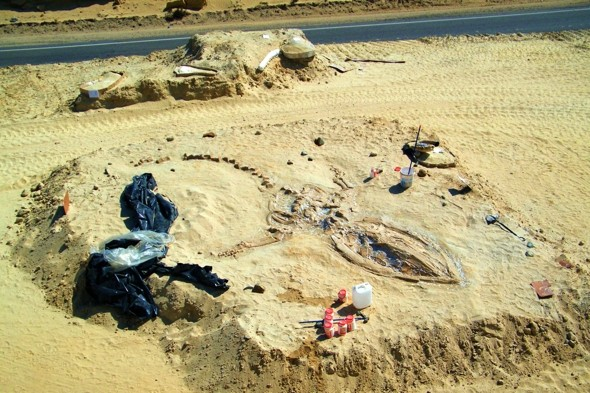 75 prehistoric whales found in Chilean desert