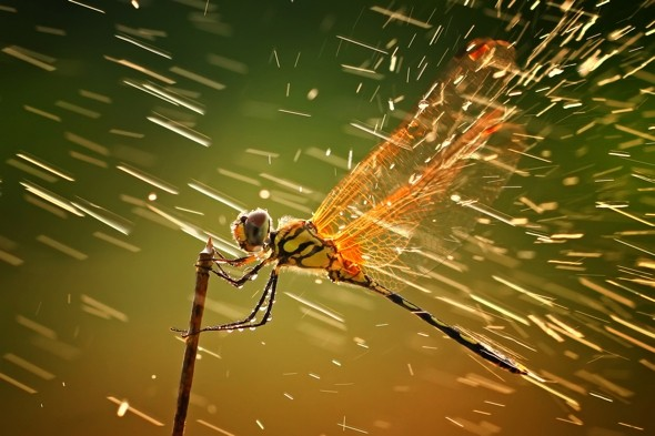 Revealed: National Geographic Photography Contest 2011 winners