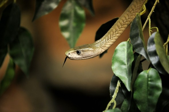 British safari guide trainee killed by black mamba in South Africa