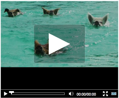 bcb0eb3f61fc3 Video of the day: Swimming with pigs in the Bahamas (yes, you read that  right)