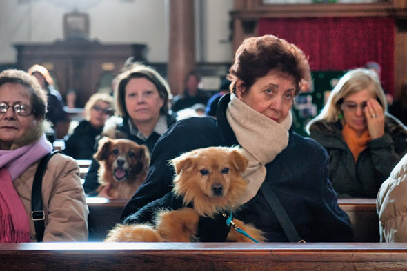 Dog and cat owners flock to Venice to have their pets blessed